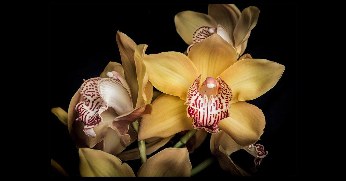Golden Orchid