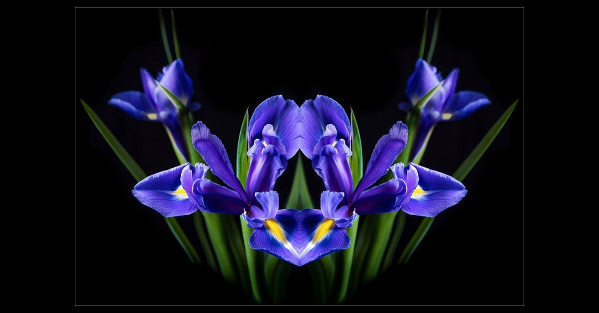 Mirrored Iris