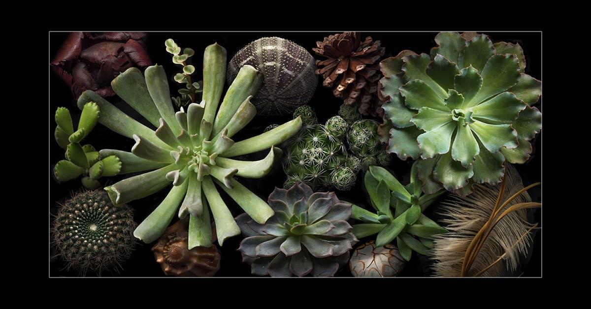 Succulents-II