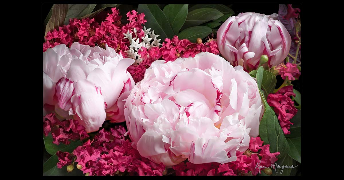 Pink Peonies in Magenta Fine Art Botanical Photography
