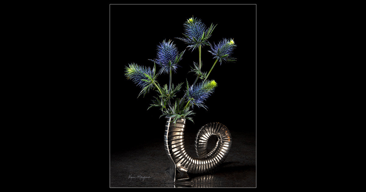 Thistles in Serpent