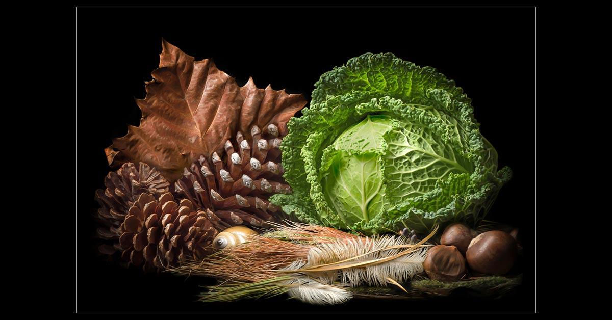 Cabbage Portrait