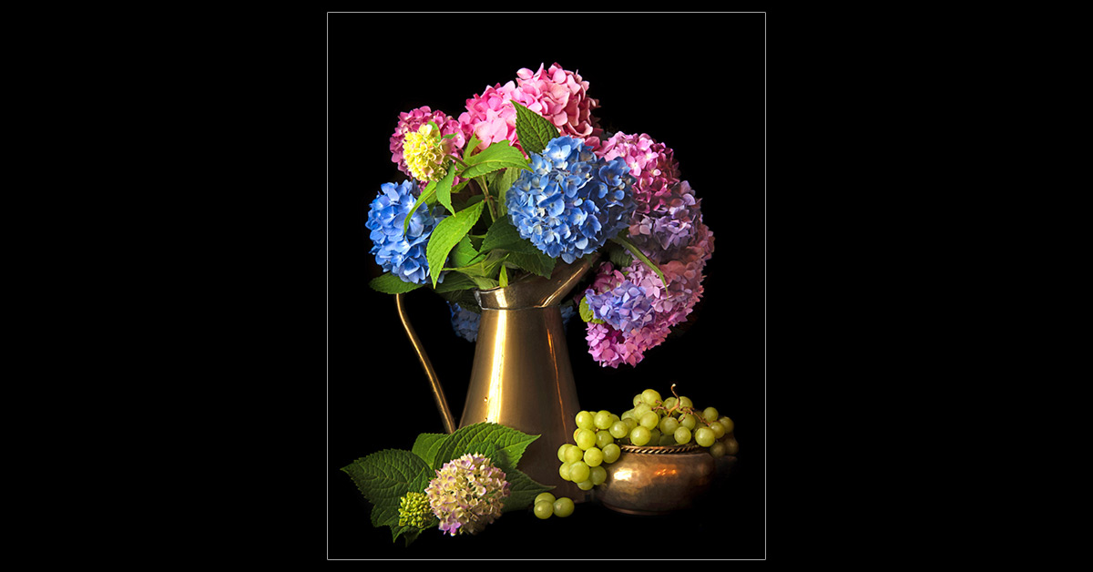 Hydrangeas with Grapes